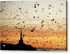 Aberystwyth Starlings At Dusk Flying Over The War Memorial Acrylic Print
