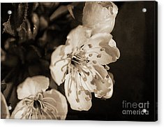 Acrylic Print featuring the photograph Abiding Elegance by Linda Lees