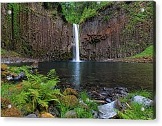 Abiqua Falls In Summer Acrylic Print by David Gn