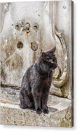 Ablution Taps Kitty Acrylic Print by Antony McAulay