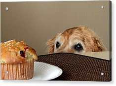 About To Be Naughty Acrylic Print