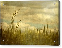 Above It All Acrylic Print by Rebecca Cozart