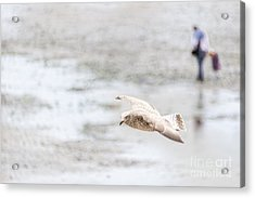Acrylic Print featuring the photograph Above The Watten Sea 2 by Hannes Cmarits