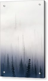 Above Them All Acrylic Print by Mike  Dawson