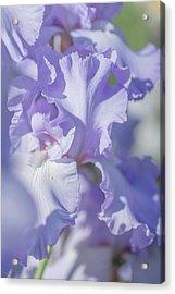 Absolute Treasure Closeup 2. The Beauty Of Irises Acrylic Print