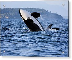 Absolutely Free - Whale Art Acrylic Print