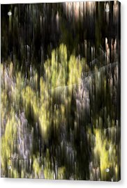 Acrylic Print featuring the photograph Abstract 3317 In The Forest by Kae Cheatham