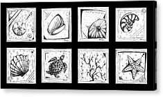 Abstract Art Contemporary Coastal Sea Shell Sketch Collection By Madart Acrylic Print by Megan Duncanson