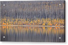 Acrylic Print featuring the photograph Abstract Autumn by Al Swasey