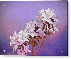 Abstract Azaleas Acrylic Print by Tom Mc Nemar