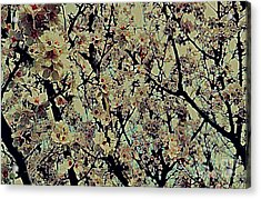 Abstract Blossoms Acrylic Print
