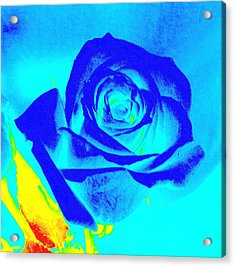 Single Blue Rose Abstract Acrylic Print