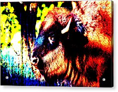 Abstract Buffalo Acrylic Print
