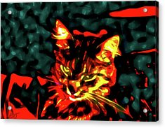 Abstract Cat Acrylic Print