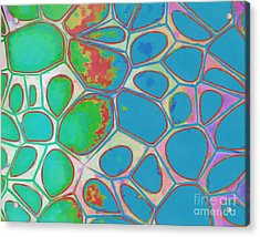 Abstract Cells 4 Acrylic Print