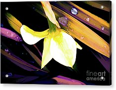 Abstract Daffodil And Droplets Acrylic Print