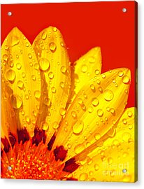 Abstract Flower Petals Acrylic Print