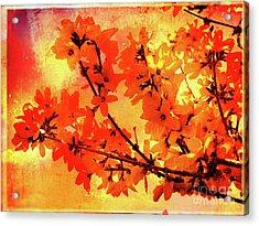 Abstract Forsythia Flowers Acrylic Print