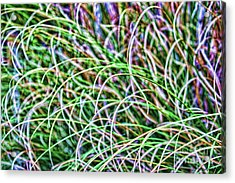 Abstract Grass Acrylic Print