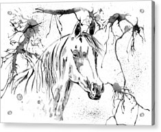Abstract Ink - Black And White Arabian Horse Acrylic Print by Michelle Wrighton