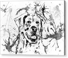 Abstract Ink - Golden Retriever In Black And White Acrylic Print by Michelle Wrighton