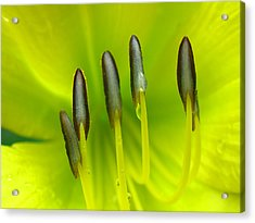 Abstract Lily Flower Acrylic Print by Juergen Roth