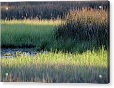 Acrylic Print featuring the photograph Abstract Marsh Grasses by Bruce Gourley