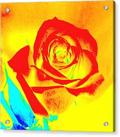 Single Orange Rose Abstract Acrylic Print