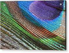 Abstract Peacock Feather Acrylic Print by Angela Murdock