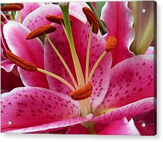 Abstract Pink Lily2 Acrylic Print