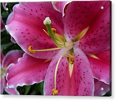 Abstract Pink Lily3 Acrylic Print