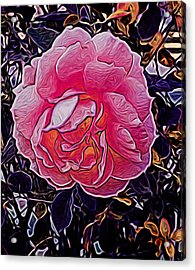 Abstract Rose 11 Acrylic Print