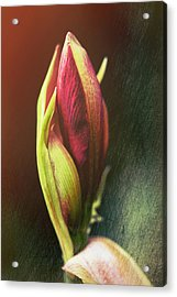 Abstract Rose Acrylic Print