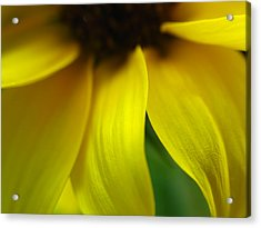 Abstract Sunflower Acrylic Print by Juergen Roth