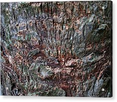 Abstract Tree Bark Acrylic Print by Juergen Roth
