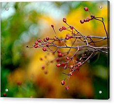 Abstract Tree Branch Acrylic Print by JoAnn Lense