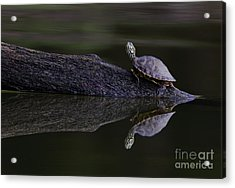 Acrylic Print featuring the photograph Abstract Turtle by Douglas Stucky