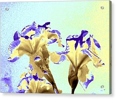 Abstract Watercolor Irises  Acrylic Print by Will Borden