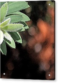 Acrylic Print featuring the photograph Abstract Watercolor by Judy Vincent