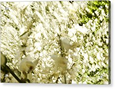 Abstract White Acrylic Print by Ray Laskowitz - Printscapes