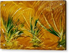 Abstract Yellow, Green Fields   Acrylic Print