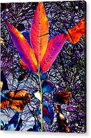 Abstracted Fall Leaves Acrylic Print by Beth Akerman