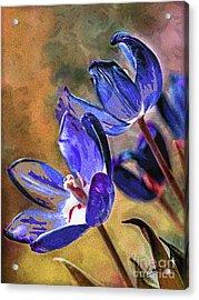 Abstracticus Tuliptimus Acrylic Print