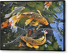 Abundance Acrylic Print by Ron Morecraft