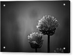 Abundantia Acrylic Print by Matthew Blum