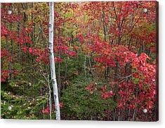 Acadia Fall Colors Acrylic Print