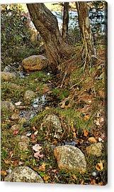 Acadia Fall Foliage Acrylic Print by Alexander Mendoza