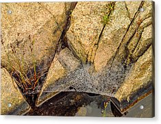 Acadia Granite With Spiderweb And Grasshopper Photo Acrylic Print by Peter J Sucy