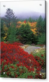 Acadia National Park Foliage Acrylic Print by John Burk