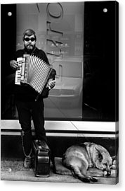 Accordian Player Acrylic Print by Todd Fox